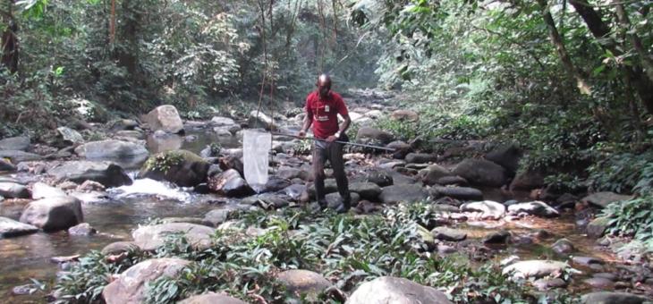 Observation des papillons sur le terrain au Nigeria