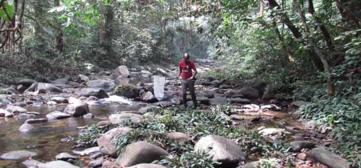 Observation field of butterflies in Nigeria