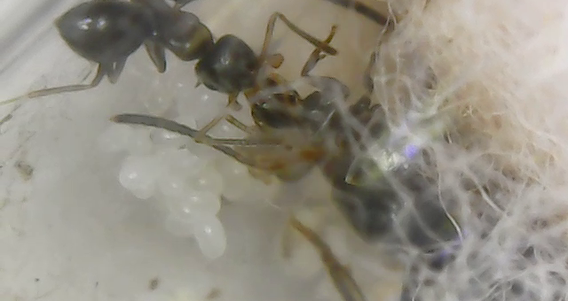 What is trophallaxis?