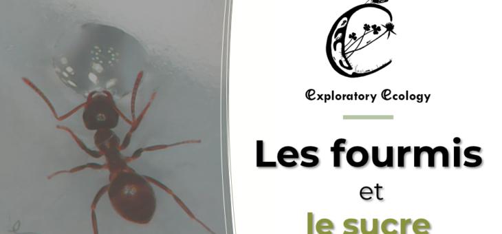 Nouvelle vidéo : Les fourmis et le sucre