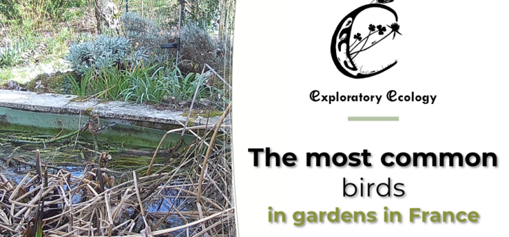 Discover the most common birds in gardens in France