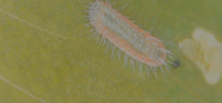ExplorEcoLab : from egg to caterpillar